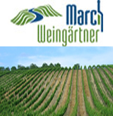Marchweingärtner